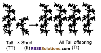 RBSE Solutions For Class 10 Science Chapter 3