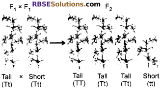 RBSE Class 10 Science Chapter 3