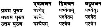 धातु रूप संस्कृत में RBSE Class 6