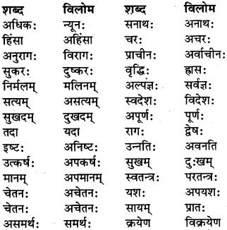 Vilom Shabd In Sanskrit For Class 6 RBSE Class 6 Sanskrit