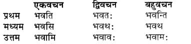 Bhanu Ke Shabd Roop RBSE Class 7