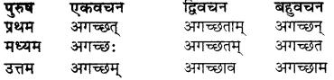 Raksha Ka Shabd Roop RBSE Class 7