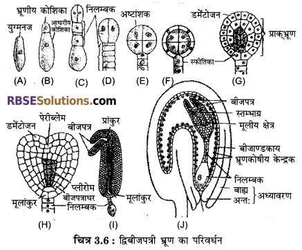 RBSE Class 12 Biology Notes Pdf Download Chapter 3