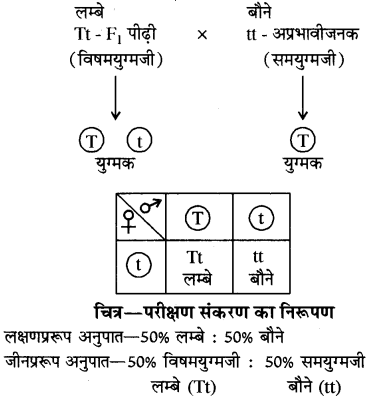 RBSE 10th Science Book Solutions