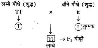 RBSE Solution 10th Class Science