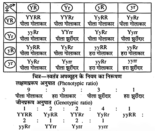 RBSE Class 10 Science Chapter 3 In Hindi