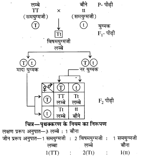 RBSE Solutions For Class 10 Science