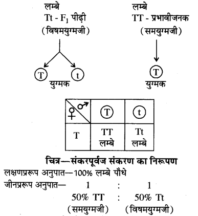 RBSE Solution Class 10 Science Chapter 3