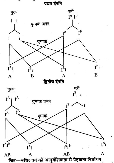 Pratiraksha Evam Rakt Samuh RBSE